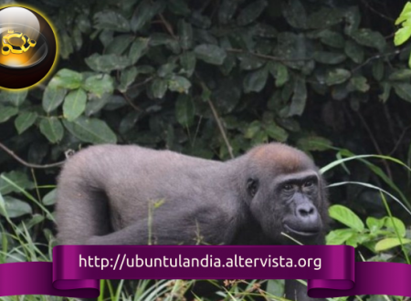 "A ottobre arriverà il gorilla, ecco Ubuntu 20.10 ""Gorilla Groovy"""